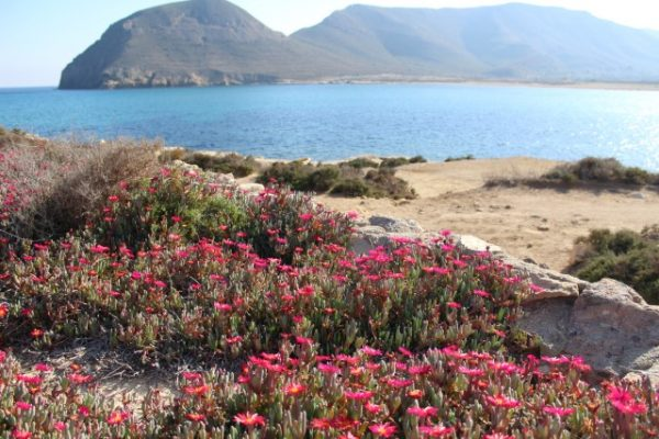 Strand El Playazo 12