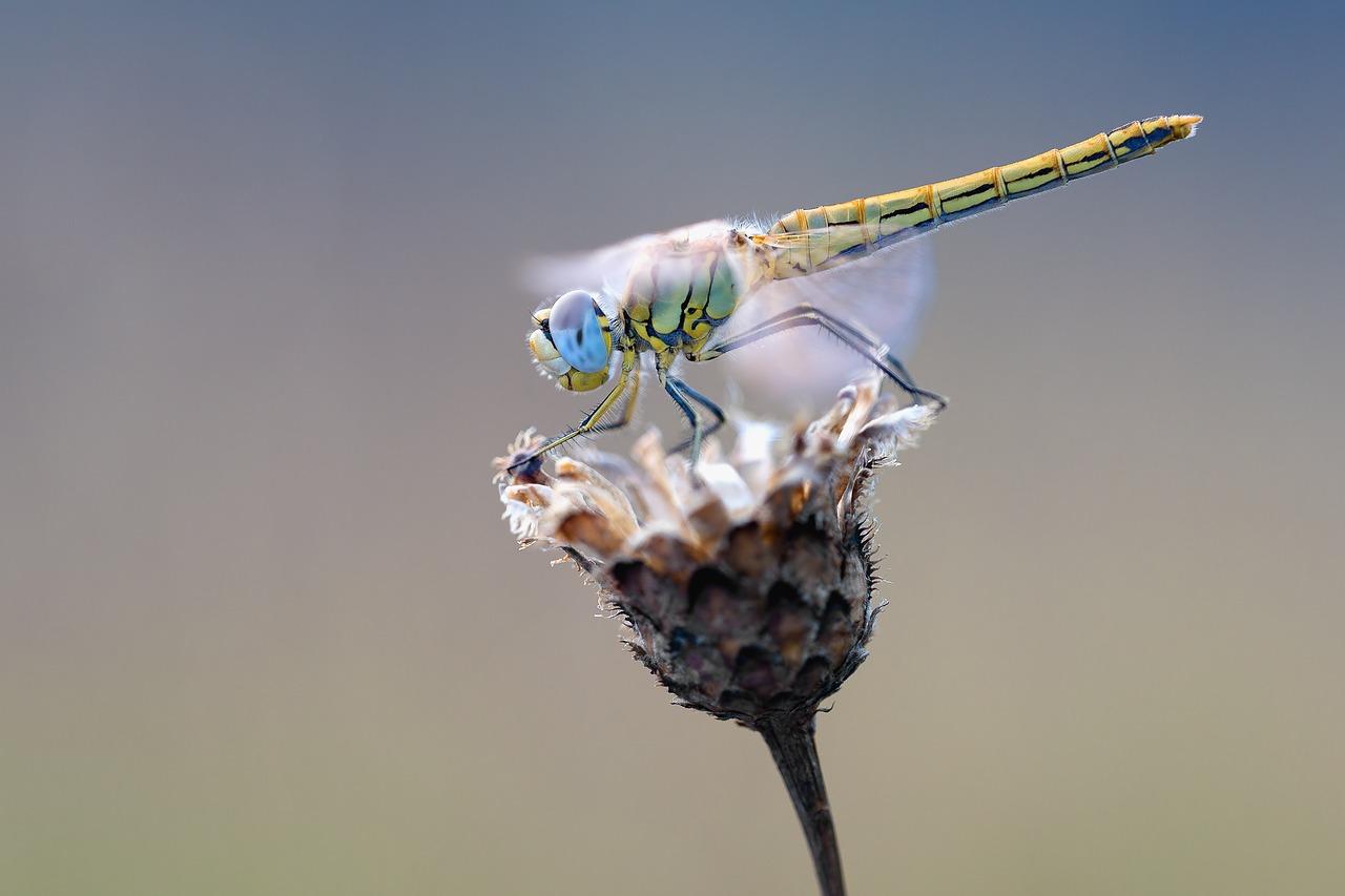 Spanisch Vokabeln: Insekten
