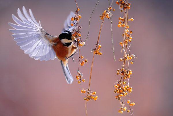 Spanisch Vögel