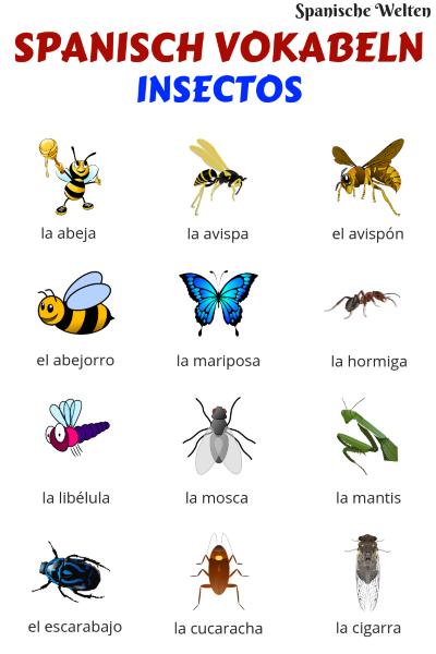 Spanisch Vokabeln Insekten