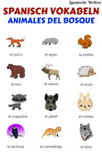 Spanisch Vokabeln Tiere im Wald