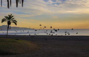 Sprachreise Malaga Strand