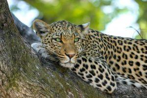 Tiere in Afrika Spanisch