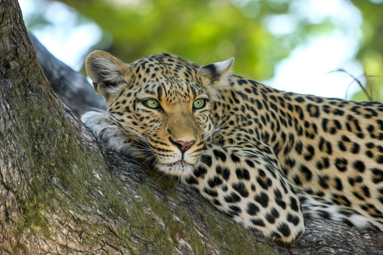 Spanisch Vokabeln: Tiere in Afrika