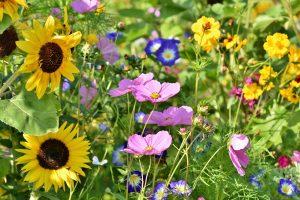 Vokabeln Blumen
