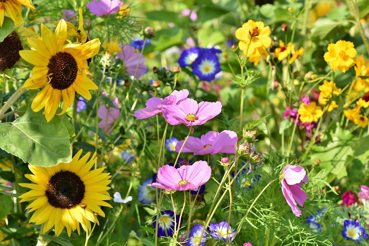 Spanisch Vokabeln: Blumen