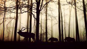 Vokabeln Tiere im Wald