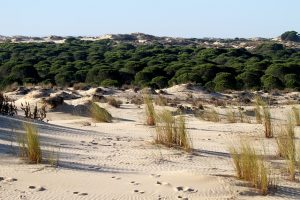 Coto de Doñana 3
