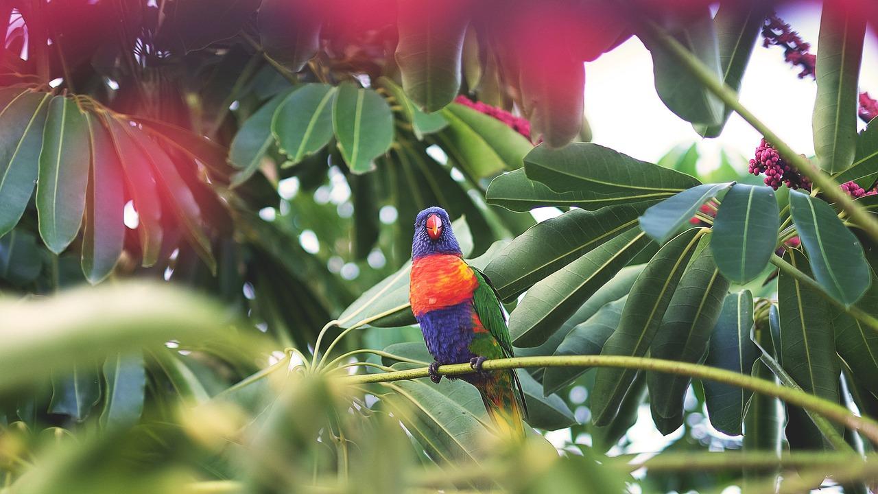 Spanisch Vokabeln: Dschungel